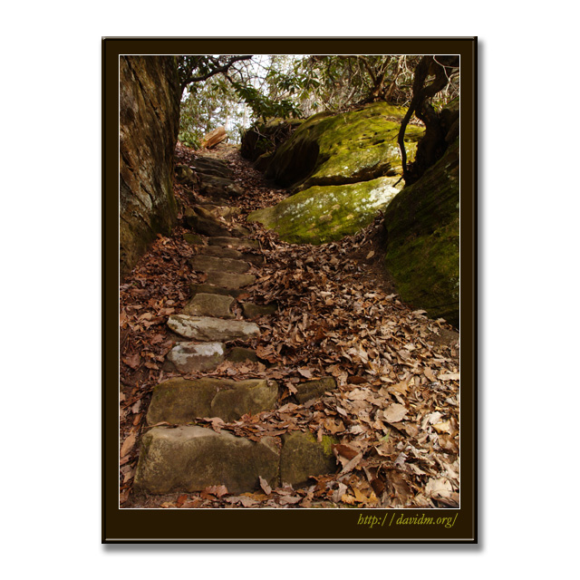 アメリカ合衆国ケンタッキー州 落葉の小道