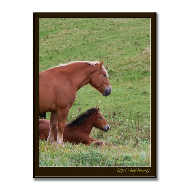 霧多布岬に住む馬