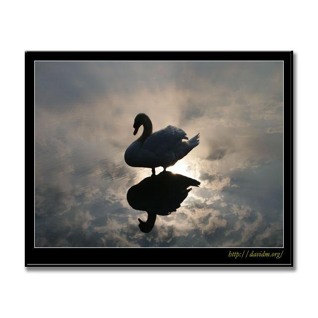 雲の上に立つ白鳥