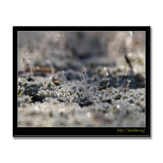 銀色に霜がかった苔