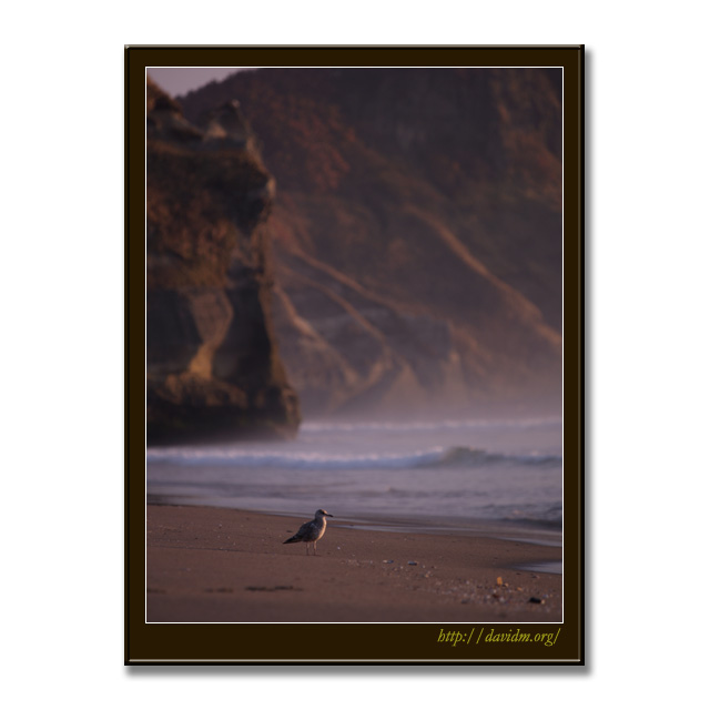 イタンキの崖と一羽のカモメ