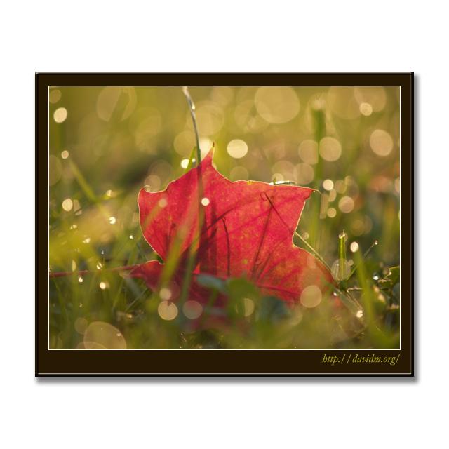 朝露に光る一枚の落ち葉