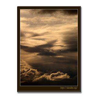 雲で描かれた空を飛ぶカモメ