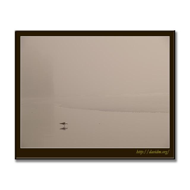 霧の室蘭と崖とカモメ