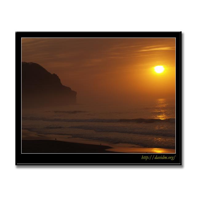 朝陽に照らされる波打ち際のカモメ