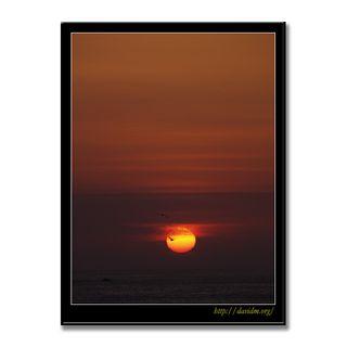朝陽に戯れるカモメ2羽
