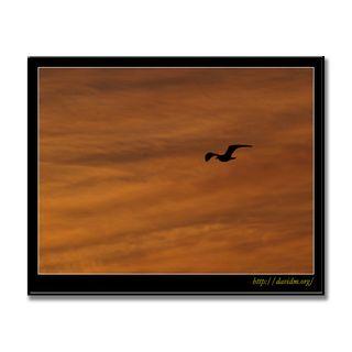 朝焼けの空を飛ぶ1羽のカモメ