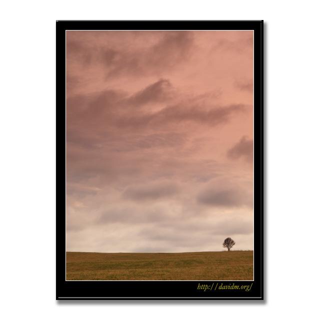 夕暮れの札内高原の一本の木