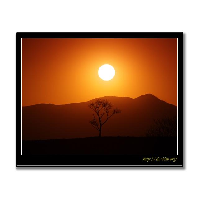 札内高原の夕陽に浮かぶ一本の木