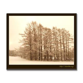 冬の寒さに耐える伊達の木立