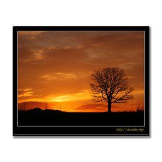一本の木の朝が始まる
