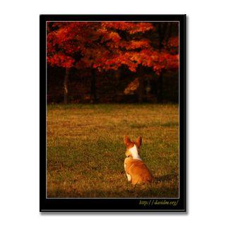 コーギーが見とれる登別の紅葉