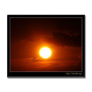 夕陽の空を飛ぶカモメ