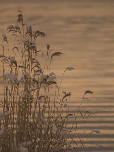 洞爺湖面とススキの写真