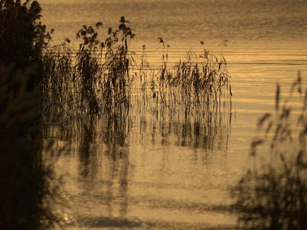 洞爺湖の湖面とススキ