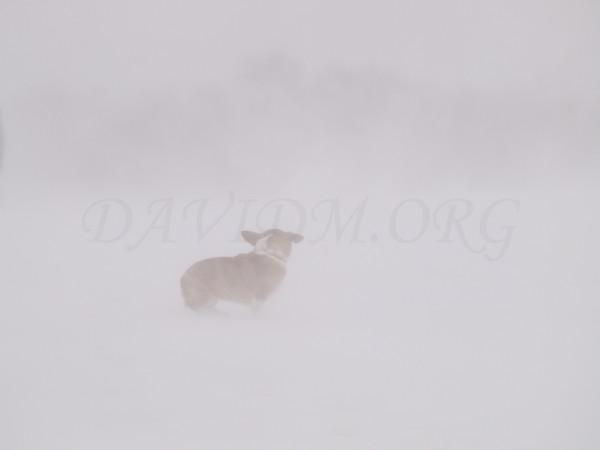 吹雪に消されるケリーの写真