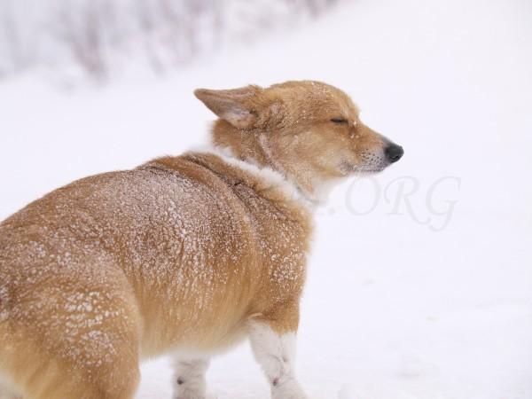 吹雪も平気なケリーの写真