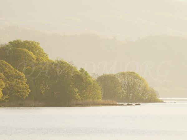 新緑の洞爺湖畔の朝の写真
