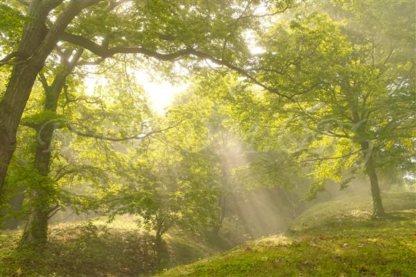 朝陽差し込む霧の公園