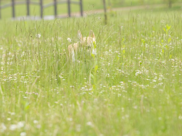 草陰に隠れて忍び寄るアーサー