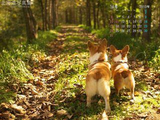 10月の壁紙カレンダー: コーギーと秋の並木道