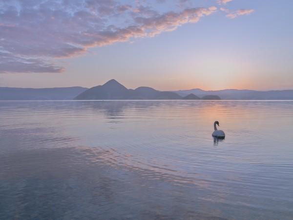 朝の洞爺湖と白鳥