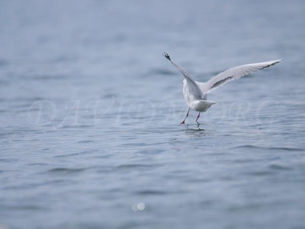 洞爺湖に降り立った鳥の写真