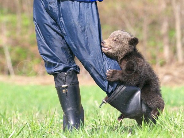 子熊の写真