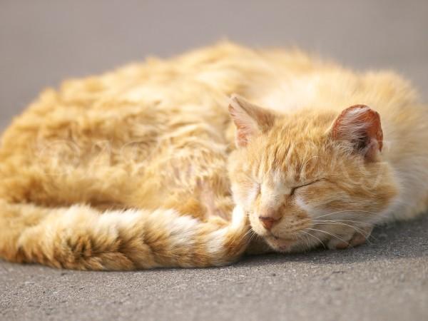 駐車場で寝るネコ