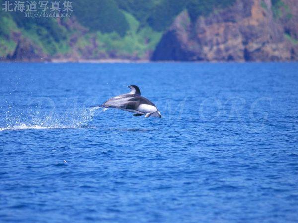 今月の壁紙:室蘭沖でイルカのジャンプ