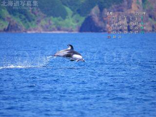 8月の壁紙カレンダー:室蘭沖でイルカのジャンプ