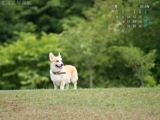 11月の壁紙カレンダー: 丘の上のコーギー