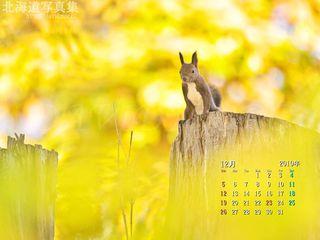 12月の壁紙カレンダー: 冬支度のエゾリス
