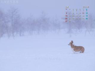 2月の壁紙カレンダー: 吹雪とコーギー
