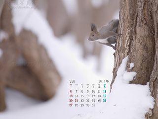 3月の壁紙カレンダー: エゾリスと雪