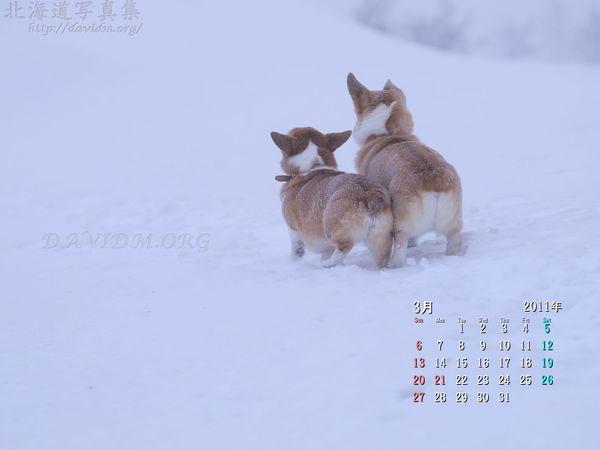 3月の壁紙カレンダー: 春を待つコーギー