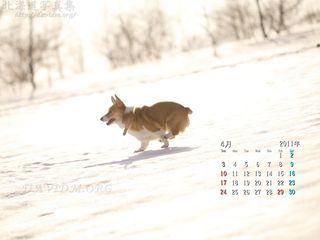 4月の壁紙カレンダー: 春の日差しとコーギー