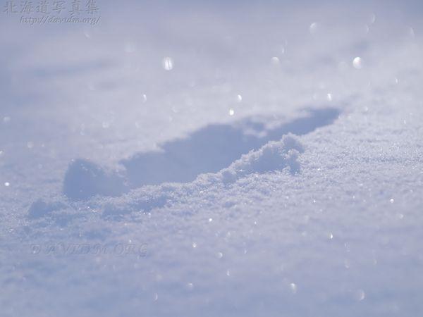 今月の壁紙: 雪の足跡