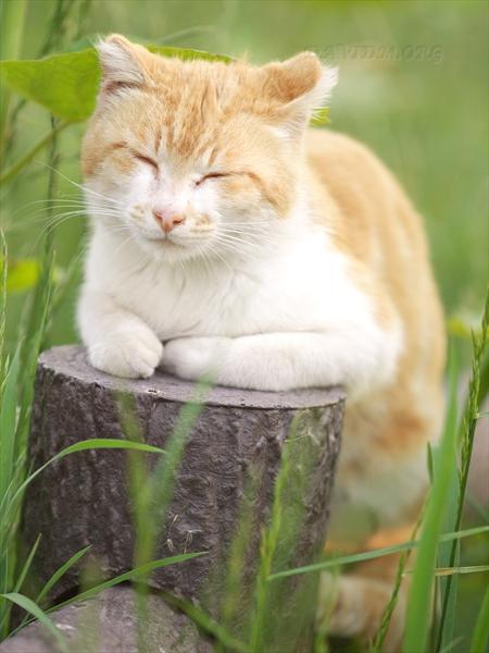 リラックスするネコのモデル
