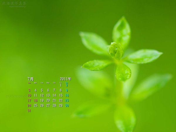 7月の壁紙カレンダー: 森の小さな命