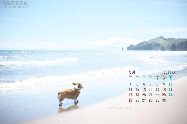 9月の壁紙カレンダー: 波打ち際のコーギー