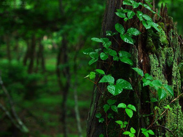 今月の壁紙: 雨降りの森の中