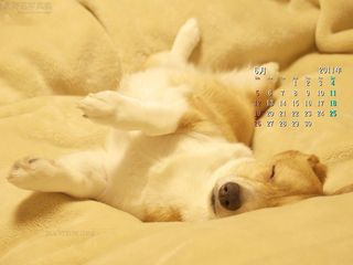 6月の壁紙カレンダー: すっかり夢の中のコーギー