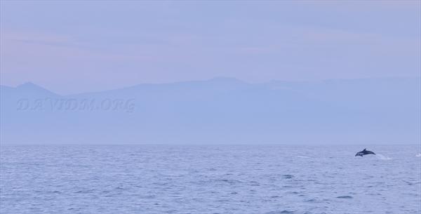 カマイルカのいる風景