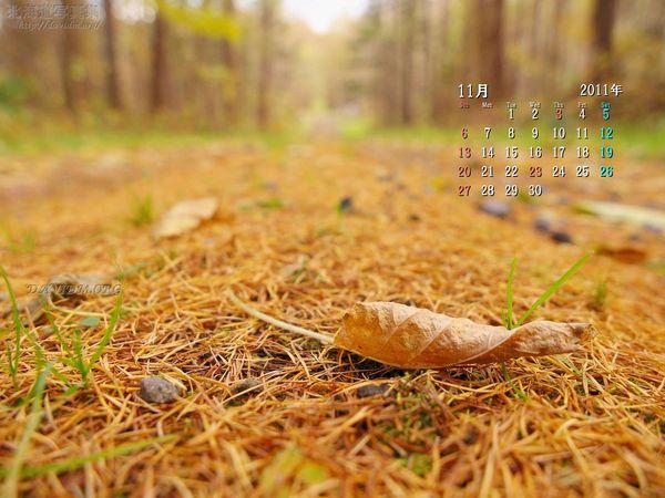 11月の壁紙カレンダー: 秋の小道