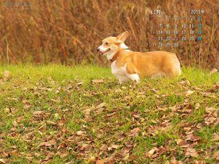 11月の壁紙カレンダー: 秋の公園とコーギー
