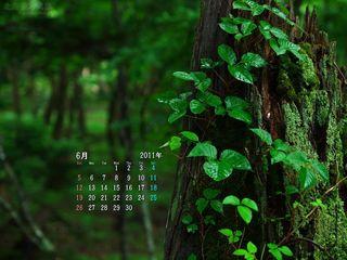 6月の壁紙カレンダー: 雨降りの森の中