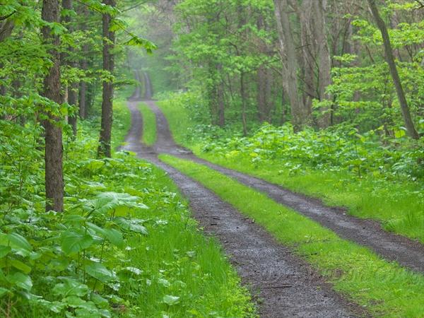 雨降る森の中