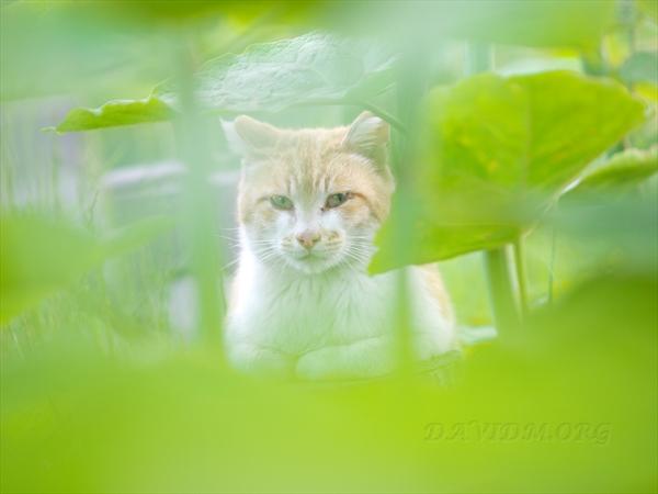 ネコのモデルさん