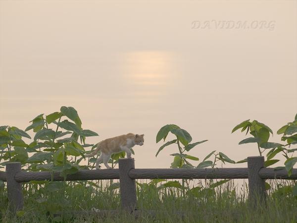 夕陽と美人ネコの写真